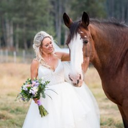 A bride petting a clydesdale horse on her wedding day