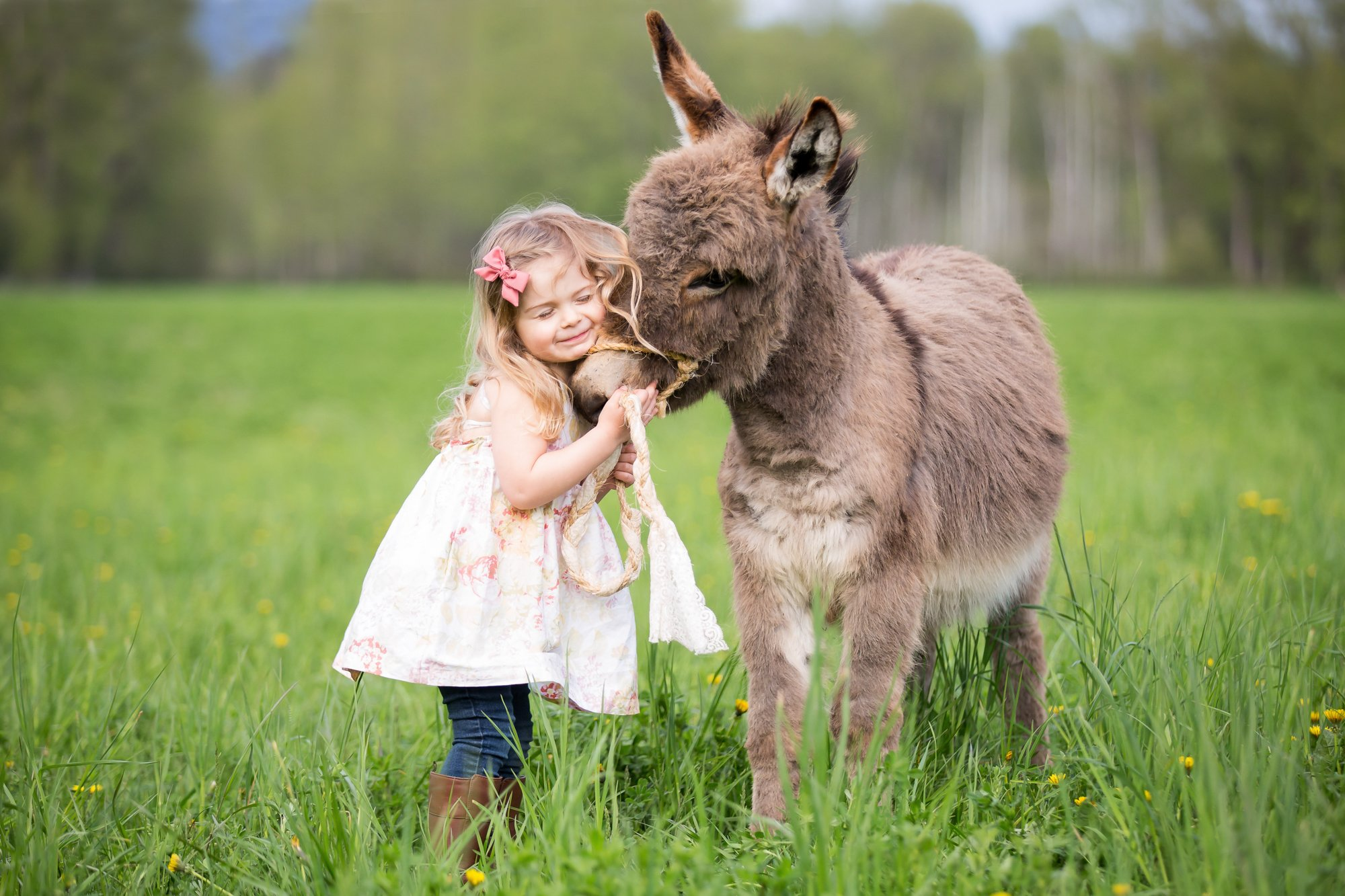 A little girl snuggling with a mini donkey